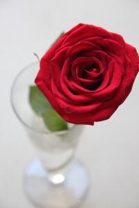 Valentine's gift. Spoilt.