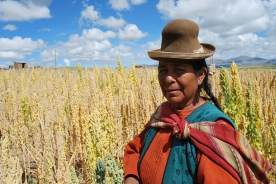 A Bolivian Farmer in her quinoa field.